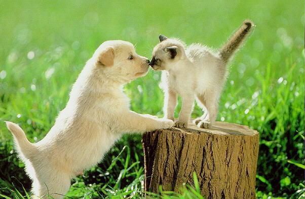Все любят котят и щенков нет ничего