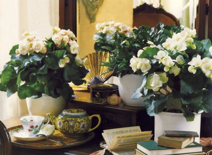 красота и здоровая атмосфера вашего жилища (1)