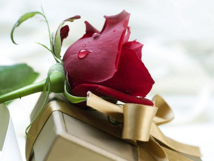 Желанный подарок для всех женщин3
